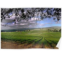 Stormy day in the Vineyard Poster