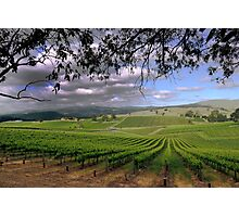 Stormy day in the Vineyard Photographic Print