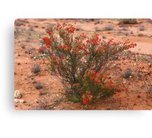 Red Wildflower Canvas Print