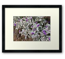 Purple Wildflower Framed Print