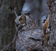 Great Horned Owl Perched By Nest Sticker