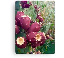 prickly pear beauty Canvas Print