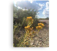 yellow desert flowers Canvas Print