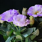A Trio of Lisianthus  by Lozzar Flowers & Art