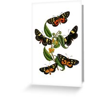FF - Butterfly-2 Greeting Card