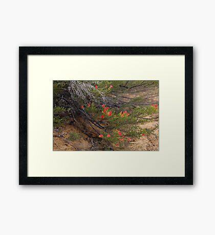 Red Wildflower Framed Print