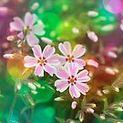 Little pink and white blossoms by RosiLorz