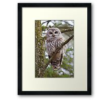 Who, Who, Who cooks for you? Barred Owl Framed Print