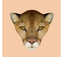 Puma concolor Photographic Print
