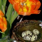 HAPPY EASTER ! - Easter Nest with Eggs and orange Tulips by RubaiDesign