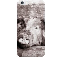 Pig on the farm iPhone Case/Skin