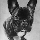 French Bulldog by Valerie Simms