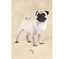 Pug Photographic Print