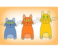 Three Little Cats Photographic Print