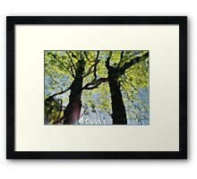 Springtime Morning With Twin Forest Trees  Framed Print