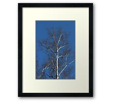 birch tree without leaves spring Framed Print
