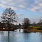 Mcbride Arboretum Winter Morning by Shawna Rowe