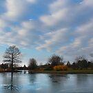 Mcbride Arboretum Winter Morning 2 by Shawna Rowe