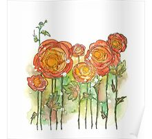 Summer ranunculus garden Poster