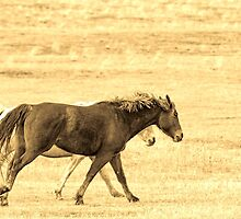 Running Mates, Horses Running Together. by Donna Ridgway