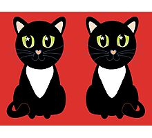 Two Black and White Cats Photographic Print