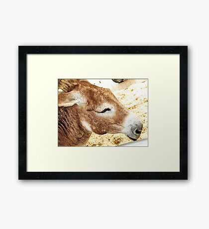 """ 'Go Ahead, Make My Day!' ""... prints and products Framed Print"