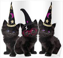 Cute Kittens Poster