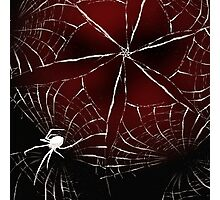 The Spider  Photographic Print