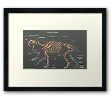 Smilodon Populator Skeletal Study Framed Print