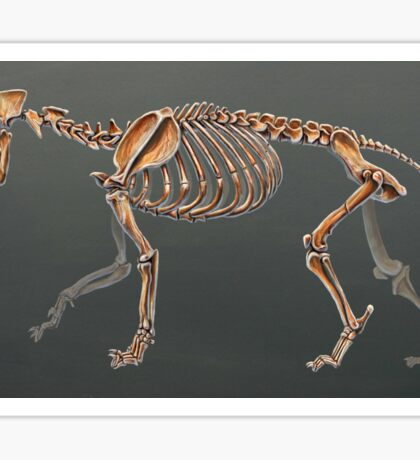 Smilodon Populator Skeletal Study No Labels Sticker