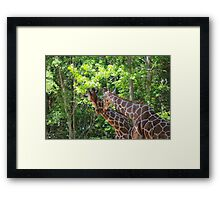 Love at first sight Framed Print