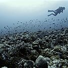 THE CORAL NICHE by NICK COBURN PHILLIPS