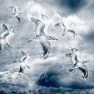 Flight Of The Gulls by CarolM