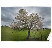 In blossom Poster