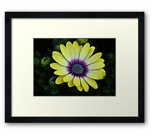 Nature Shines in My Garden Framed Print