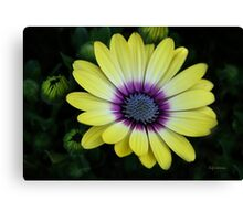 Nature Shines in My Garden Canvas Print