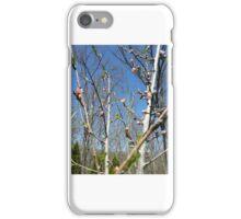 Peach Blossoms iPhone Case/Skin