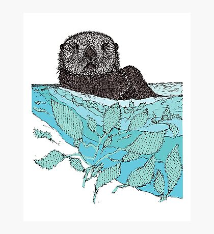 Sea Otter Sketch Color Photographic Print