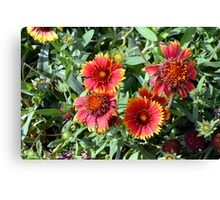 Red beautiful flowers in the garden. Canvas Print
