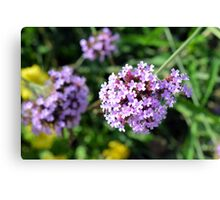 Macro on purple flowers in the garden. Canvas Print