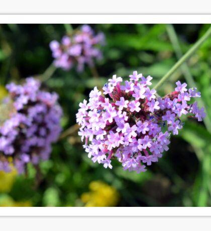 Macro on purple flowers in the garden. Sticker