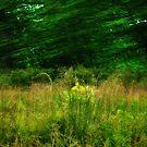 green wind by Marie Monroe