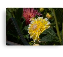 Happier Dahlia Canvas Print