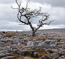 Limestone & Hawthorn by mikebov