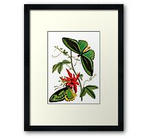 FF - Butterfly-5 Framed Print