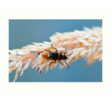 macro bug Art Print