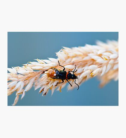 macro bug Photographic Print