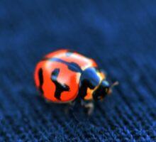 Lady beetle macro Sticker