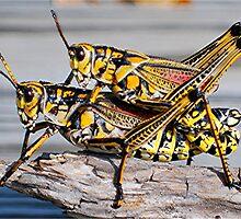 Double Take Grasshopper  by Karen Harding
