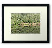 trees reflected in lake Framed Print